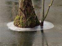 Baum_im_Eis